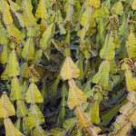 Euphorbias behind a white wall — Stock Photo #8881677