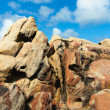 Sandstone at Canal Rocks, Yallingup, Western Australia — Stock Photo