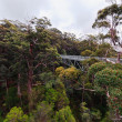 Stock Photo: Treetop walk, Australia