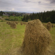Hay in stacks in a panoramic landscape — Stock Photo #8883013
