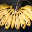Bunch of bananas — Stock Photo #8884379