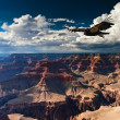 Grand Canyon National Park — Stock Photo #8885461