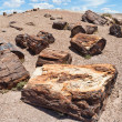 Petrified Forest National Monument - Stock Photo