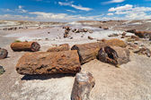 Petrified Forest National Monument — Stock Photo