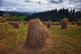 Hay in stacks in Tatra mountains, Poland — Stock Photo