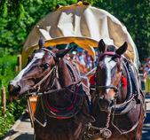 Horses at Tatra Mountains — Foto Stock