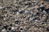 Midye kum — Stok fotoğraf