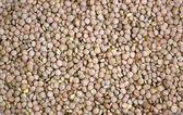 Lentil seeds — Stock Photo