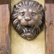 Lion head — Stock Photo