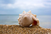 Shell and blue sky — Stock Photo