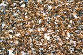 Mejillones closeup — Foto de Stock