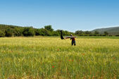 Girl enjoying sunny day in a field — Stock Photo