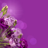 Magic purple flowers — Stock Photo