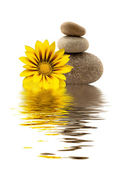 Spa stones with yellow flower — Stock Photo