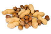 Filberts and peanuts — Stock Photo