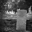 Stock Photo: Old cemetery in fall in black and white