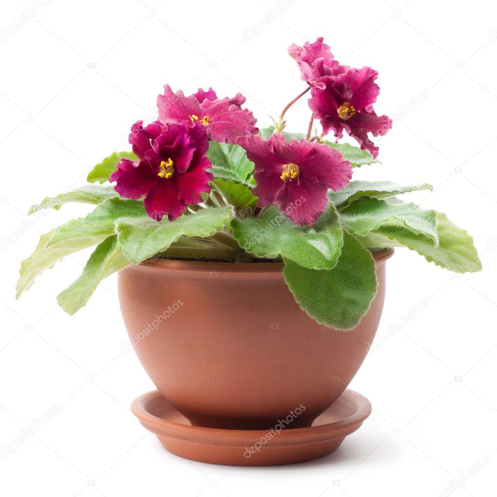Как подобрать горшки для фиалок, чтобы посадить цветы правильно? 17