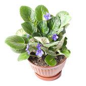 Flowerpot — Stock Photo