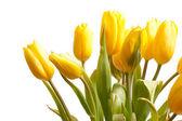 Tulipani isolati su bianco — Foto Stock