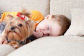 Little boy sleeping and hugging loving dog york — Стоковое фото
