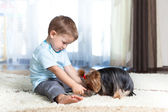 Adorable child feeding yorkshire terrier dog at home — Stock Photo