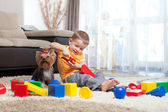 Child playing with building blocks at home. York dog sitting nea — Stok fotoğraf