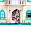Kitten looking out toy house door — 图库照片