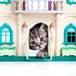 Kitten looking out toy house door — Stockfoto