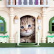 Cute kitten looking out toy house — Stock Photo #10419073