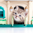 Cute kitten looking out toy house — Stock Photo