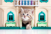 Kitten playing in toy house — Stock Photo