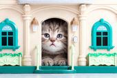 Small kitten sitting in toy house — Stock Photo