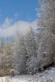 El bosque en invierno — Foto de Stock