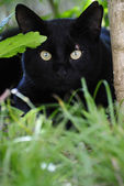 The cat in grass — Stock Photo