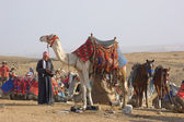 Bedouin and camel — Stock Photo