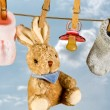 Rabbit and pacifier — Stock Photo #10010238