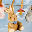 Rabbit and pacifier — Stock Photo