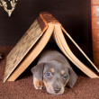Sleeping under a book - Stockfoto
