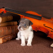 Music puppy — Stock Photo