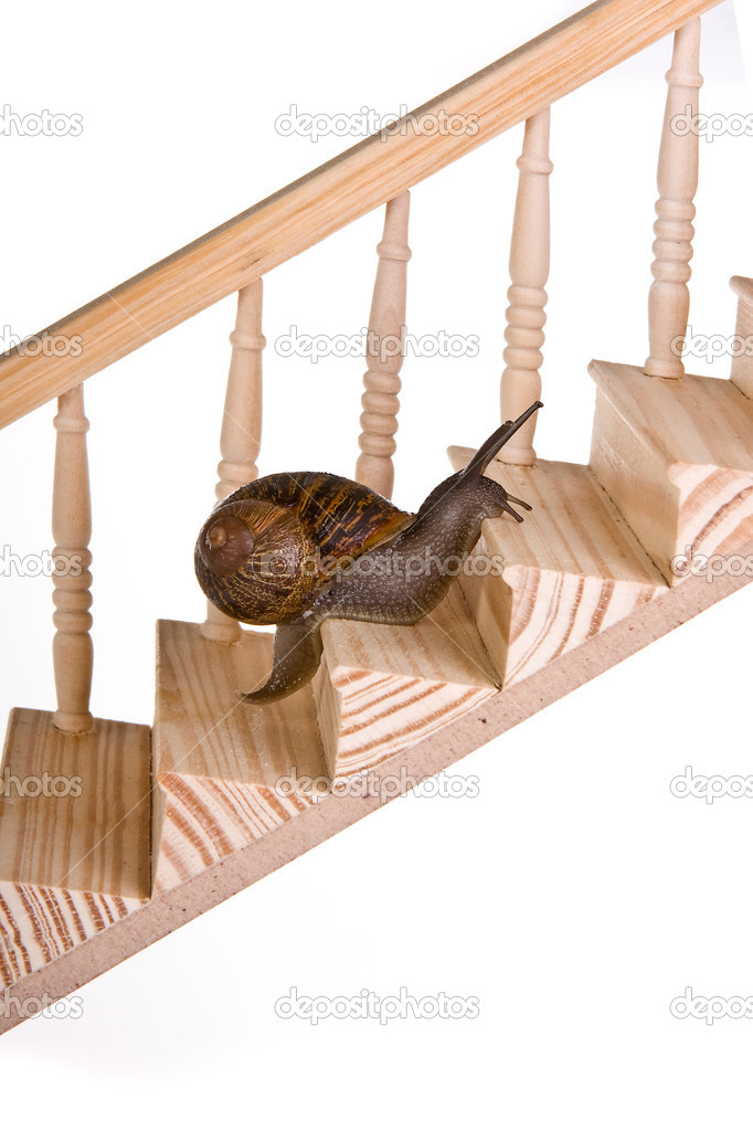 Funny snail slowly climbing a wooden staircase — Stock Photo #10094177