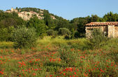 Provence village and poppies — Stock Photo