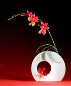 Ikebana design — Stock Photo