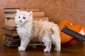 在表上的小猫 — 图库照片