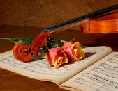 Fiddle and roses — Stock Photo