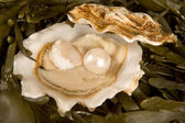 Open oyster with pearl — Stock Photo