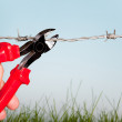 Cutting barbed wire — Stock Photo #10481317
