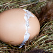 Hatching chick in nest - Photo