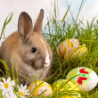 Easter bunny and painted eggs — Stock Photo