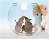 Tempted kitten — Stock Photo