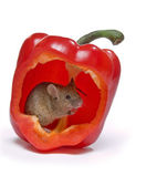Hot mouse — Stock Photo